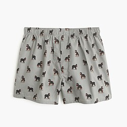 Bernese Mountain Dog boxers