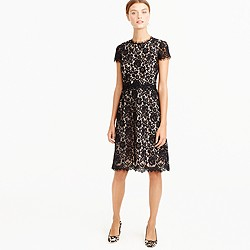 Collection lace fit-and-flare dress